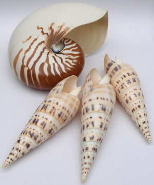 SEA SHELL COLLECTION