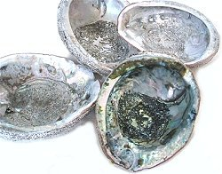 Abalone shell white