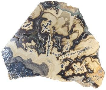 Crystals Sea Shells Rocks Minerals Tropical Shells